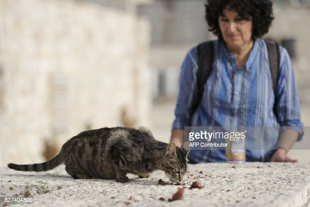 Tova Saul an Orthodox Jew feeds a stray cat in a neighbourhood in Jerusalem's Old City on July 12 2017 For more than two decades Tova has fed and...