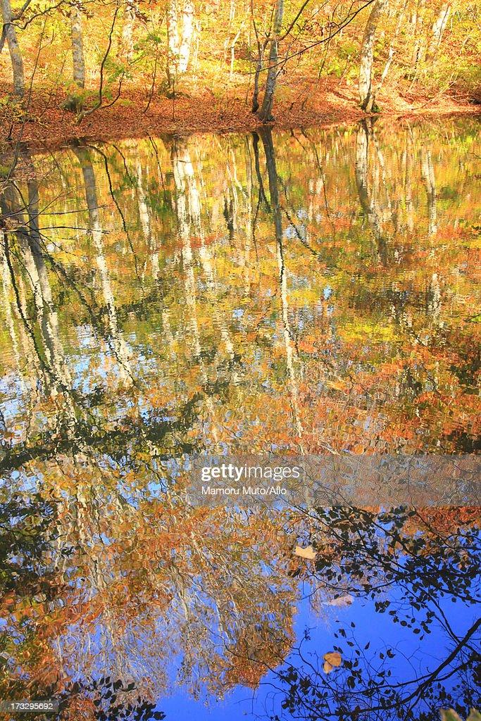 Towada in Autumn, Aomori Prefecture