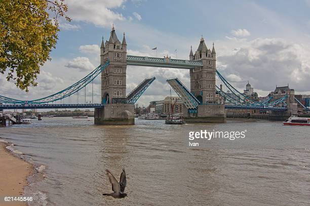 Tower Bridge Lifting, Open with Boat and Bird under Blue Sky, London, England, UK