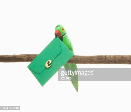 Toy bird and green envelope with 'e' mark. : Stock Photo