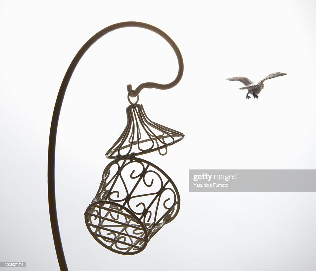 Toy bird fly away from cage. : Stock Photo