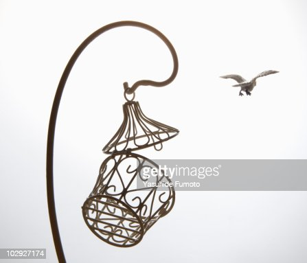 Toy bird fly away from cage. : Foto de stock