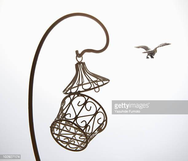 Toy bird fly away from cage.