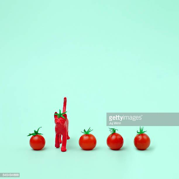 Toy cat painted like a tomato in row with cherry tomatoes