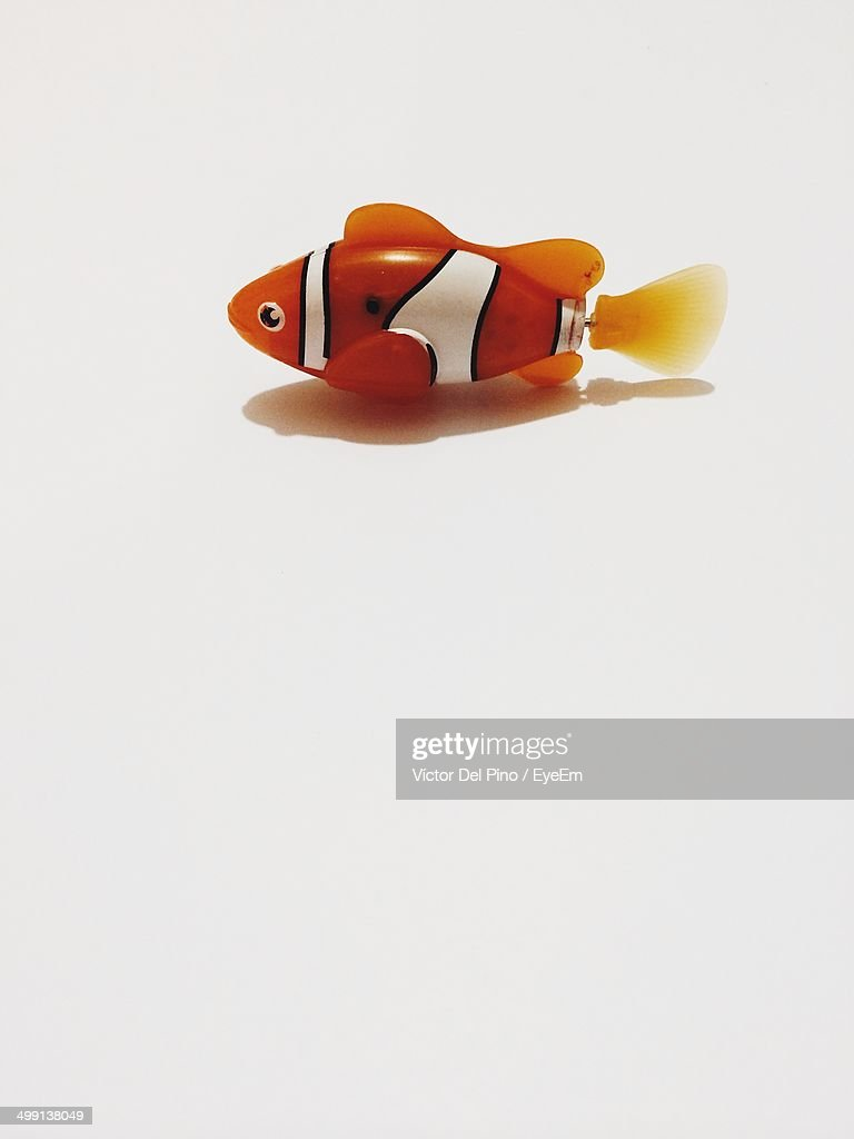 Toy clown fish over white background