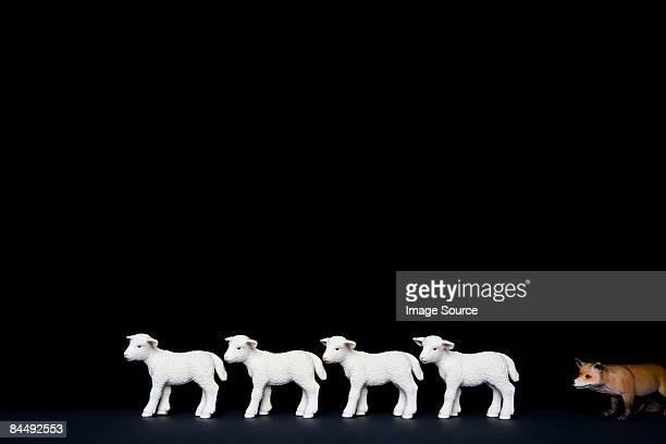 Toy fox hunting lambs