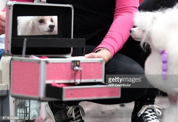 Toy poodle 'Lotti' from Austria takes a look in the mirror of her mistress' beauty case during a contest at the 'World Dog Show' dog fair in Leipzig...