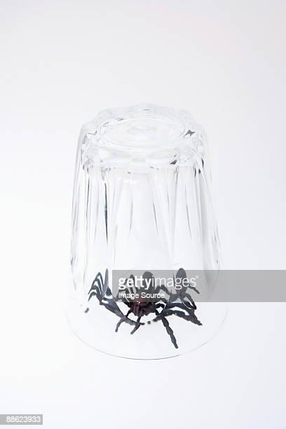 A toy spider trapped under a glass