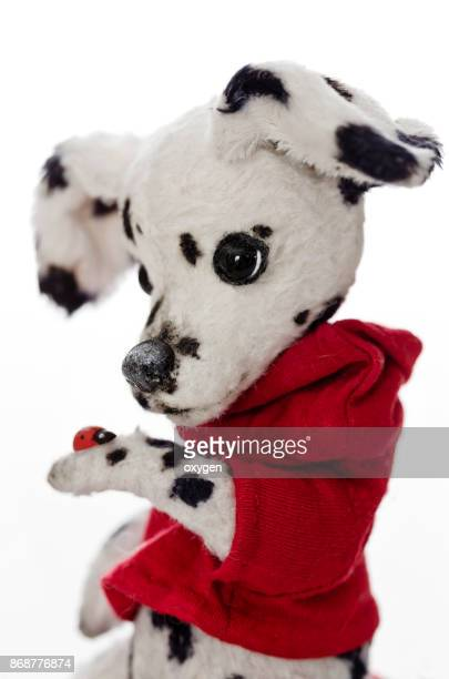 Toy Teddy Dog Dalmatian watches a little ladybug on her paw