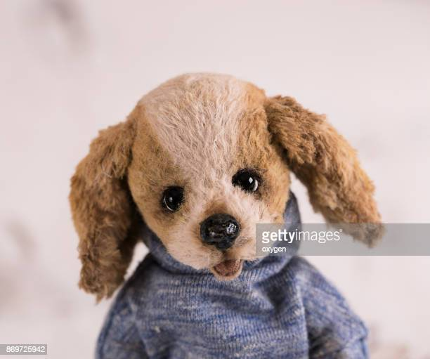 Toy Teddy Dog portrait with open-mouthed on a white background