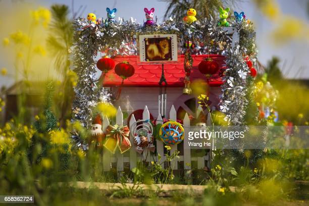 Toys adorn the tomb of pet dog Lingdang at Wangzai pet cemetery on March 27 2017 in Wuhan Hubei province China Wangzai Pet Service Company is a...