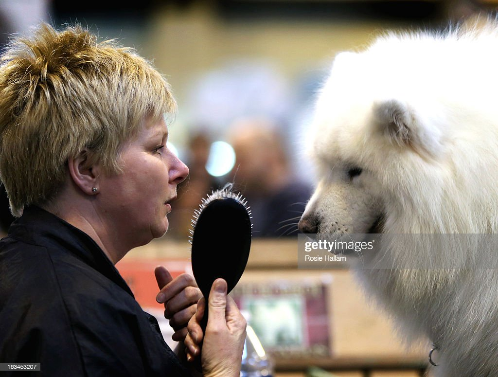 Tracey Elder from Fyfe grooms her Samoyed Bolan during the final day at Crufts Dog Show on March 10, 2013 in Birmingham, England. During this year's four-day competition over 22,000 dogs and their owners will vie for a variety of accolades but ultimately seeking the coveted 'Best In Show'.
