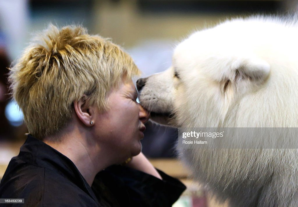 Tracey Elder from Fyfe is given a lick on her face by her Samoyed Bolan dog during the final day at Crufts Dog Show on March 10, 2013 in Birmingham, England. During this year's four-day competition over 22,000 dogs and their owners will vie for a variety of accolades but ultimately seeking the coveted 'Best In Show'.