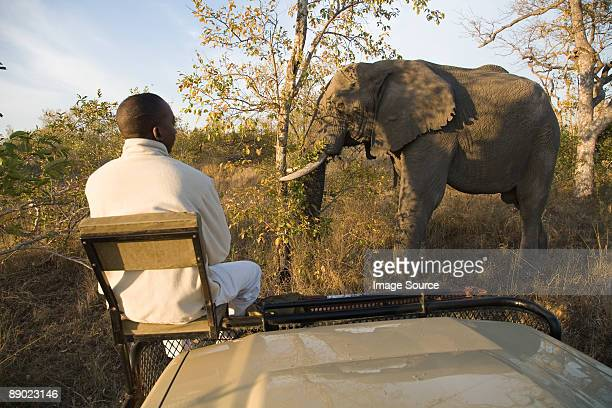 Tracker looking at african elephant