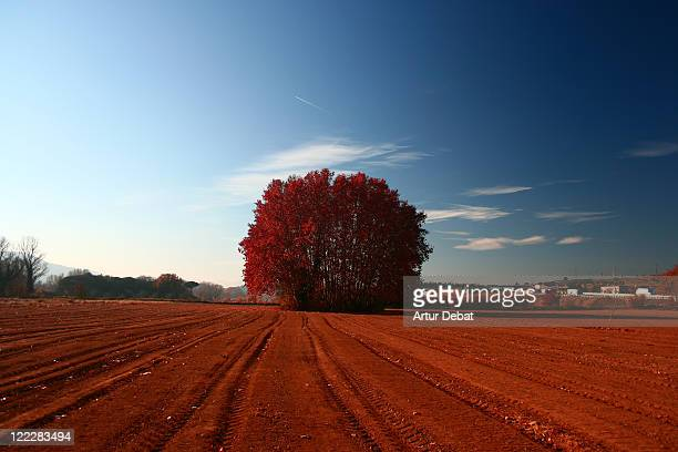 Tracks in red landscape with big flora in between