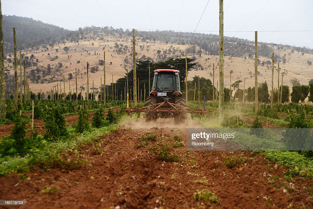 A tractor cultivates soil between rows of young hop plants at Hops Products Australia's operations in Bushy Park, Tasmania, Australia, on Tuesday, Feb. 26, 2013. Australia's Bureau of Statistics is scheduled to release fourth-quarter gross domestic product figures on March 6. Photographer: Carla Gottgens/Bloomberg via Getty Images