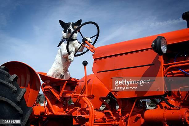 Traktor Hund