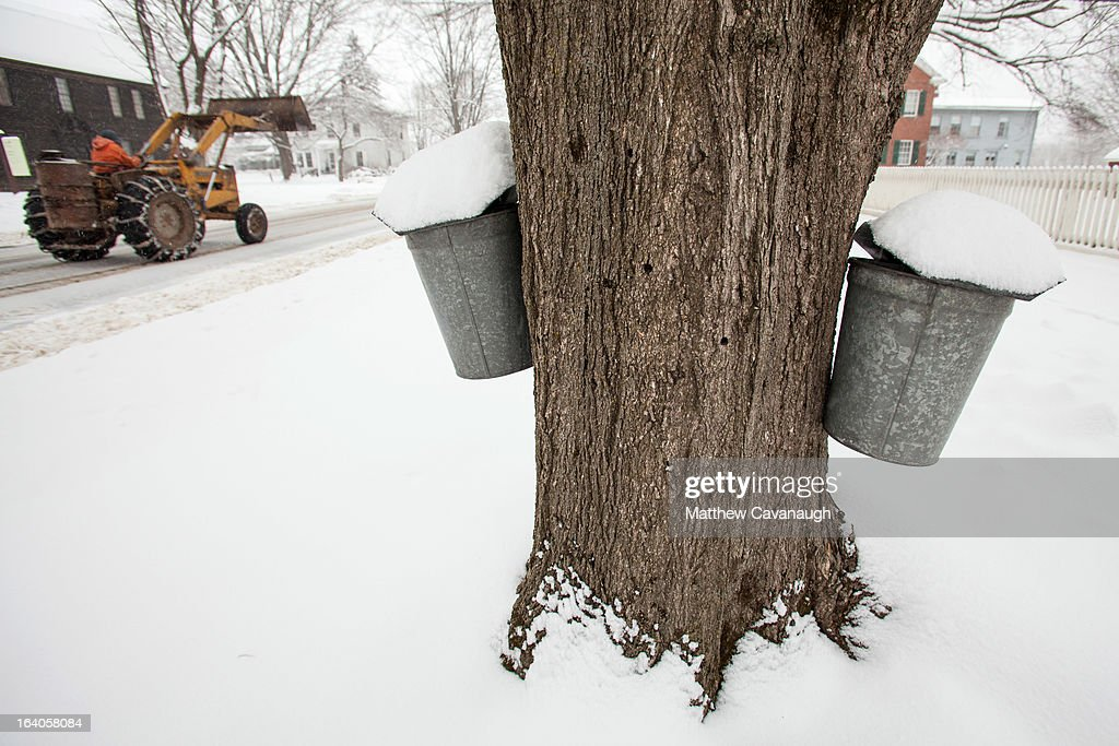 A tractor drives past maple sap collection buckets along Main Street in the historic village of Old Deerfield on March 19, 2013 in Deerfield, Massachusetts. Another winter storm blew through the Northeast yesterday, with snow and sleet closing schools in some areas and making for a messy morning commute.