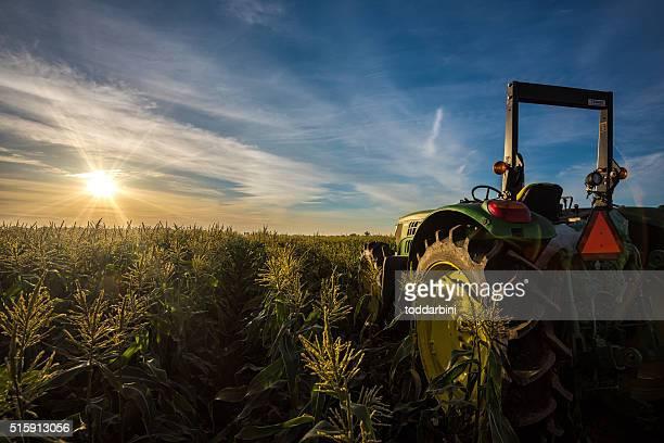 トラクターのトウモロコシフィールドの日の出