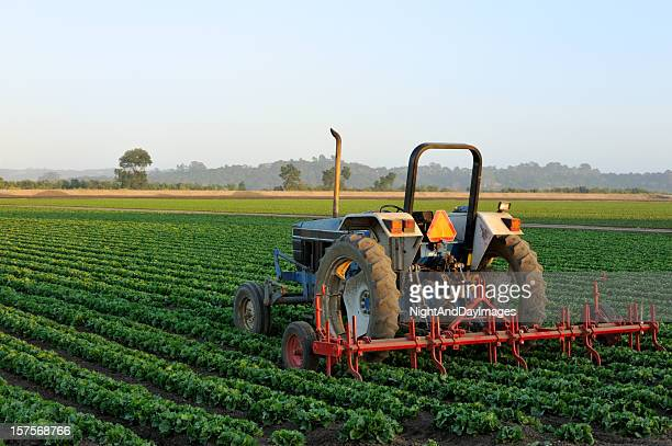 Tractor in a Vegetable Field