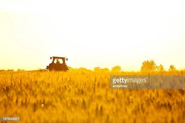 tractor on cornfield