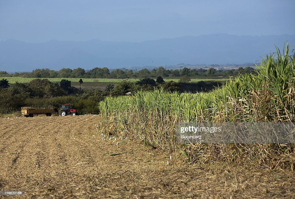 A tractor removes a trailer loaded with freshly cut sugarcane during a harvest in a field near Jatibonico, Cuba, on Sunday, Jan. 13, 2013. Sugar prices fell 16 percent last year as global supplies are forecast to outpace demand for a third year in 2012-13, according to the London-based International Sugar Organization. Photographer: Andrey Rudakov/Bloomberg via Getty Images