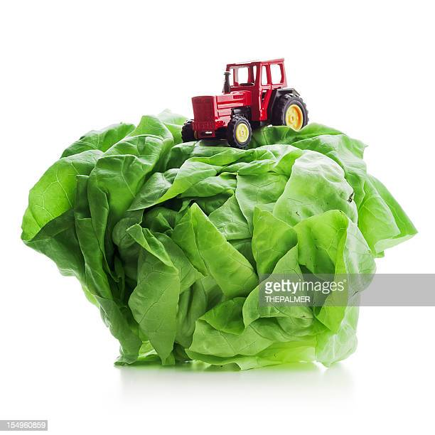 tractor toy on top of fresh lettuce