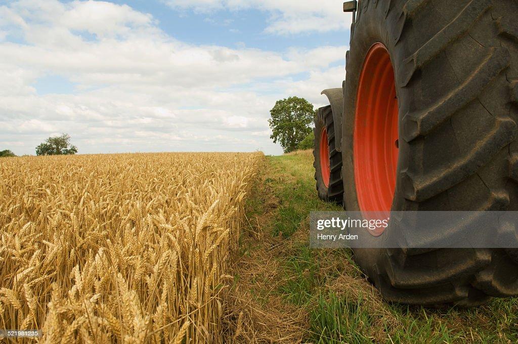 Tractor wheels in field of wheat