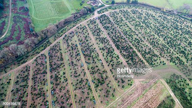 A tractor with a netting machine stands in a field at Santa Fir Christmas Tree Farm near Guildford UK on Monday Dec 7 2015 With inflation stagnant...