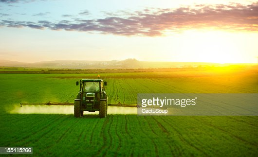 Tractor working in field of wheat