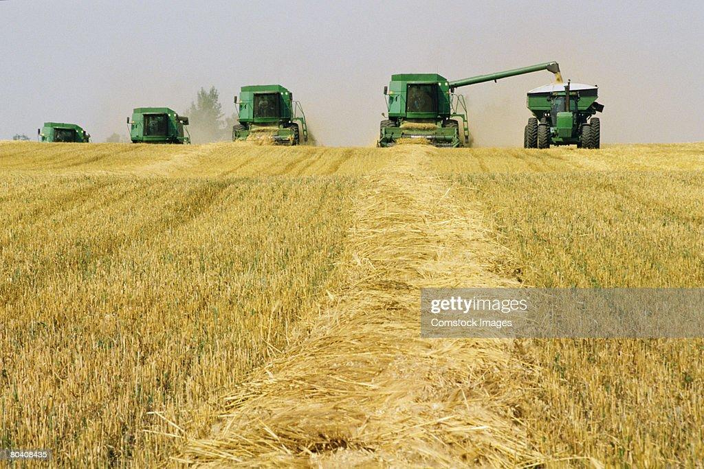 Tractors harvesting grain