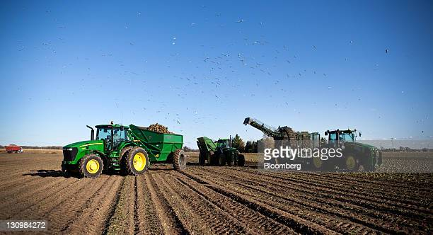 Tractors work in tandem during the sugar beet harvest in Bay City Michigan US on Monday Oct 24 2011 US sugar supplies this year will fall to the...