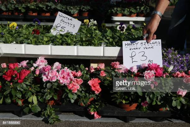 A trader adjusts a price tag on a plant stall in East Street Market in south London on September 2 2017 East Street Market also known locally as 'The...