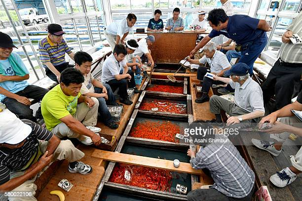 Traders check goldfish during the auction on July 25 2016 in Yatomi Aichi Japan goldfish auction is in full swing ahead of summer festivals across...