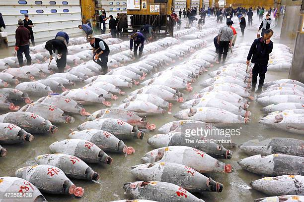 Traders examine frozen tuna ahead of an auction at the Tokyo Metropolitan Central Wholesale Market commonly known as the Tsukiji Fish Market on May 1...