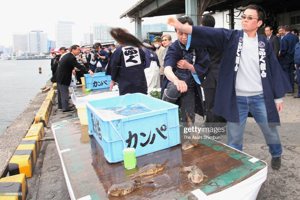 Traders release pufferfishes in pray for good catch next season after a pufferfish mass held at Tsukiji Fish Market on April 19, 2014 in Tokyo, Japan. As the best season of pufferfish almost finishes, the mass to appreciate the fish is held annually in April, 150 pufferfish traders and chefs participate in the 59th mass this year.