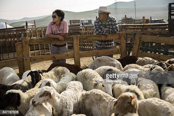 Traders stand near sheep and goats in a pen at a livestock market on the outskirts of Ulaanbaatar Mongolia on Wednesday July 13 2016 The nation's...
