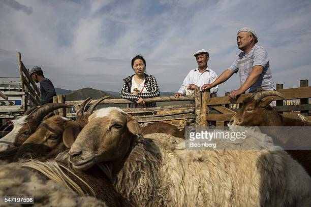 Traders stand next to a pen of goats and sheep at a livestock market on the outskirts of Ulaanbaatar Mongolia on Wednesday July 13 2016 The nation's...