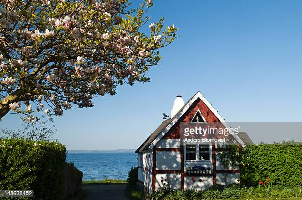 Traditional cross timbered house and flowering magnolia tree.