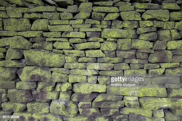 Traditional English stone wall covered in green moss on the boundary wall of Lyme Park National Trust house and grounds in Cheshire England United...