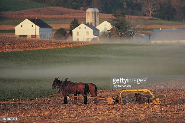 Traditional farm with mule-drawn plow
