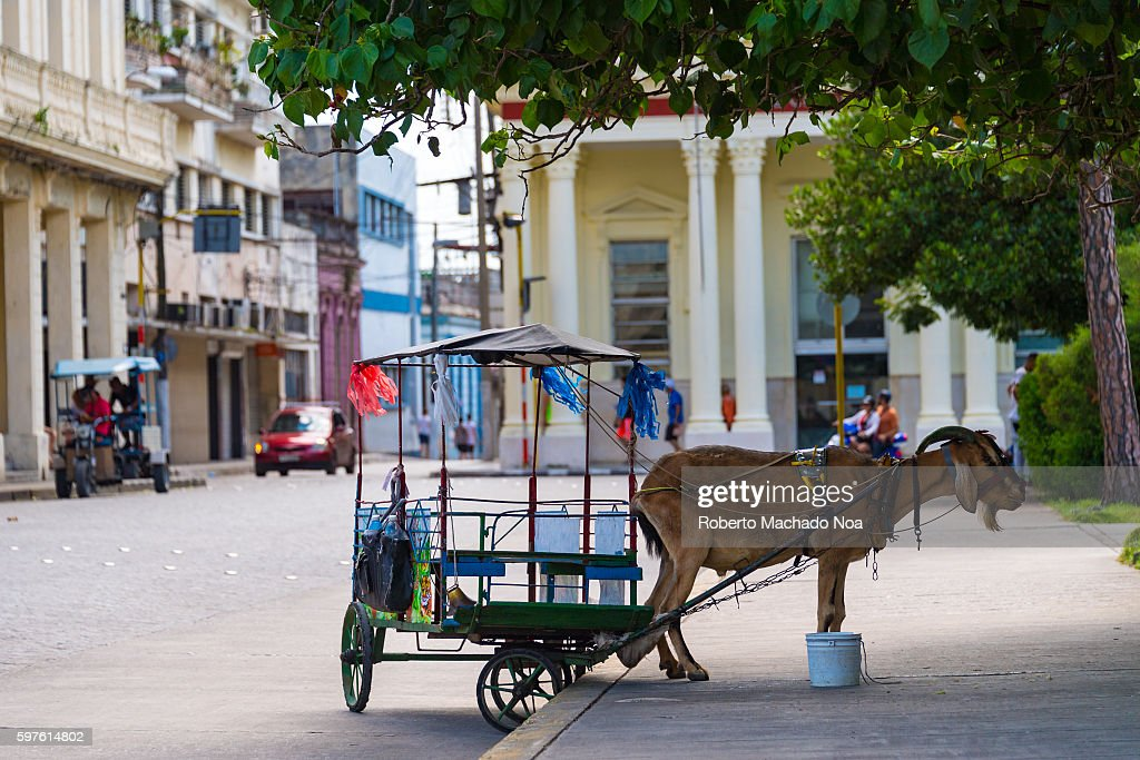 Traditional goat drawn carriage for entertaining kids in the Leoncio Vidal plaza Series Santa Clara city wakes up
