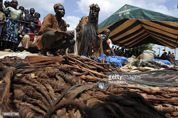 Traditional Ivorian Dozo hunters members of the Binkadi association that gathers all Dozos in the region sell charms on September 27 2013 in Kani in...