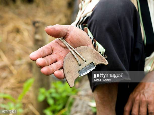 A traditional rice cutting tool used by a White Hmong ethnic minority man harvesting glutinous rice on an upland field Ban Hauywai Phongsaly province...
