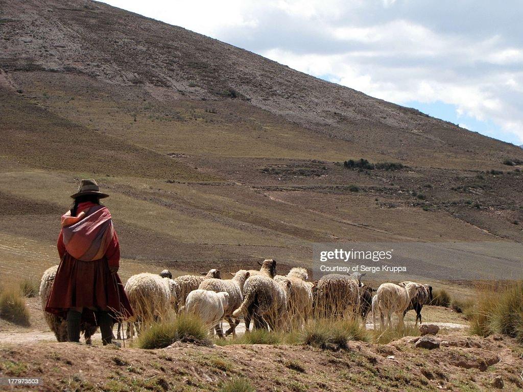 Traditional sight of Peru : Stock Photo