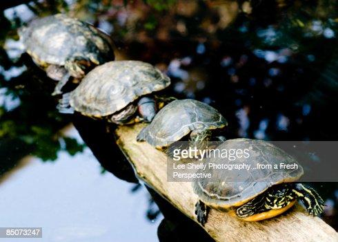 Traffic Jam on Turtle Highway