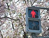 Traffic light in spring