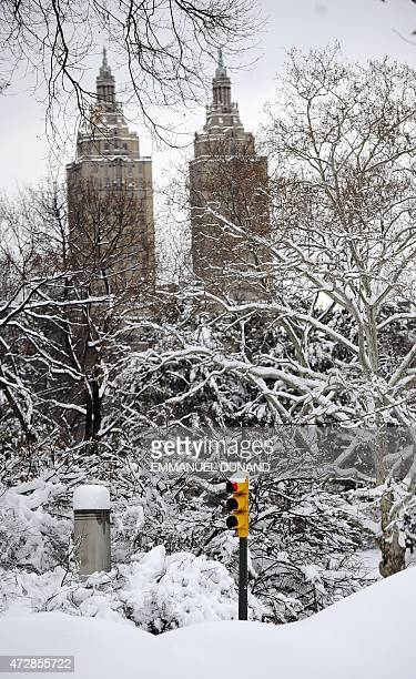 A traffic light stands after heavy snow falls in Central Park in New York January 27 2011 New York shut down two airports public schools and most...