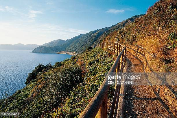 Trail above Manarola Cinque Terre national park Liguria Italy