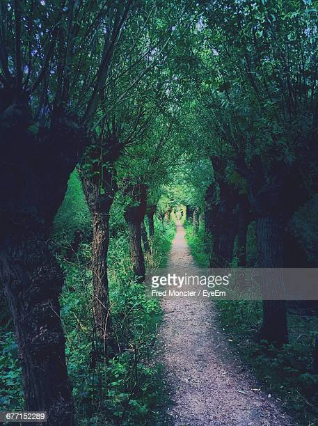 Trail Amidst Trees At Forest